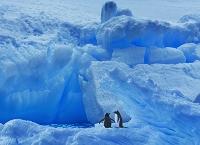 南極 アイスブルグとジェンツーペンギン