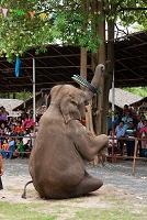 タイ スリン近郊 ゾウの村 エレファントビレッジ 曲芸