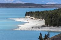 プカキ湖の西岸の白い砂州と植林地