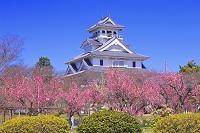 滋賀県 ウメの咲く長浜城
