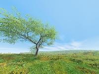 緑の丘と風に吹かれる1本の木