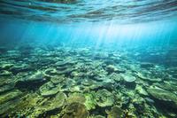 鹿児島県 夏のサンゴ礁