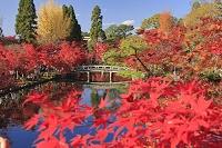 京都府 紅葉の永観堂