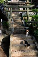 神社の犬と猫