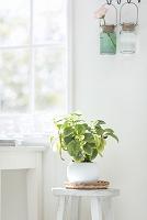 窓辺のイスの上に置かれた観葉植物