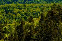 北海道 中山峠付近の豊かな原生林