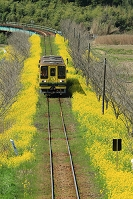 千葉県 いすみ鉄道 ムーミン列車