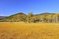 群馬県 尾瀬 研究見本園の紅葉と草原