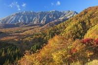 鳥取県 紅葉の鍵掛峠より大山南壁(伯耆富士)