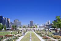 大阪 中之島公園 バラ園