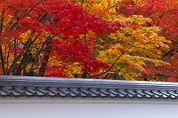 京都府 京都市 白壁と紅葉