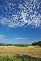北海道 麦ロールの丘と雲