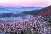 長野県 東条のあんず畑から見た北アルプスのビーナスベルト