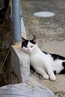 道ばたで横たわる猫