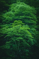 青森県 緑の木々