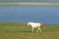 北海道 白馬 クオーターホース