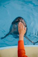 鼻先を触られるイルカ