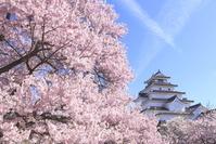 福島県 会津若松市 鶴ヶ城 桜