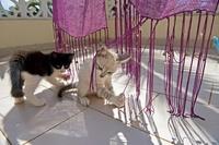 ショールで遊ぶ二匹の子猫