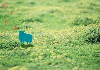 草原にいる羊