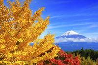 静岡県 紅葉の木々と富士山