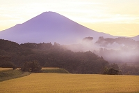 静岡県 小山町 富士山と夕暮れの稲田