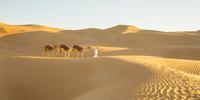 アラブ首長国連邦 アブダビ ラクダ ルブアルハリ砂漠