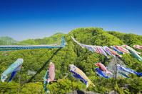 茨城県 春の竜神大吊橋にはためく鯉のぼり
