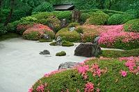 神奈川県 神奈川 明月院 和風庭園