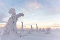 フィンランド ノルウェー