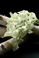 カラーと白樺のデコ