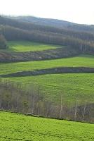 岩手県 宮古市 緑の牧草