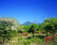 山梨県 美し森と八ヶ岳