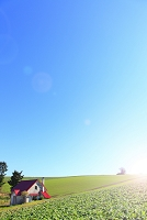 北海道 メルヘンの丘 赤い屋根の家と初冬の丘陵地