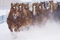 冬に走る馬の集団
