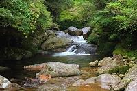 屋久島 白谷雲水峡