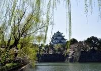 愛知県 柳と名古屋城