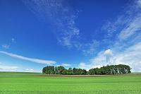 北海道 麦畑と雲 美瑛町
