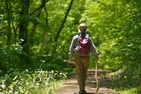 初夏の森を歩くハイカー