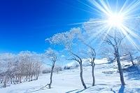 長野県 美ヶ原 樹氷