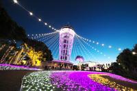 神奈川県 藤沢市 江の島灯台イルミネーション