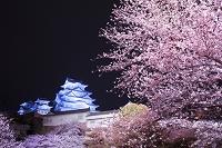 兵庫県 桜と姫路城 夜景