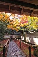 京都府 大徳寺 高桐院参道と紅葉