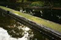 東京 小石川後楽園の西湖の堤