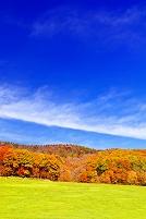 北海道 草原と紅葉