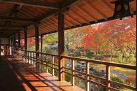 京都府 十輪寺 高廊下越しに見る庭園と紅葉