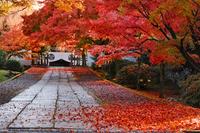 京都府 養源院