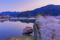 山口県 桜咲く錦川と錦帯橋ライトアップ