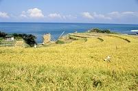 新潟県上越市 棚田と日本海