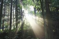 京都府 朝の斜光